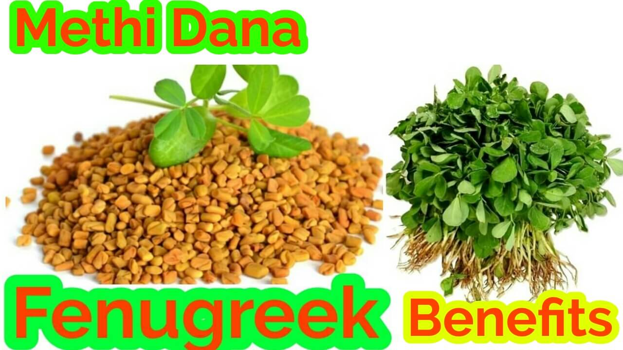 fenugreek benefits-methi dana